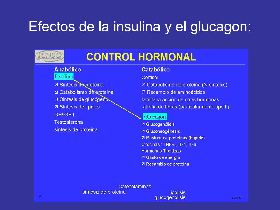 Efectos de la insulina y el glucagon: