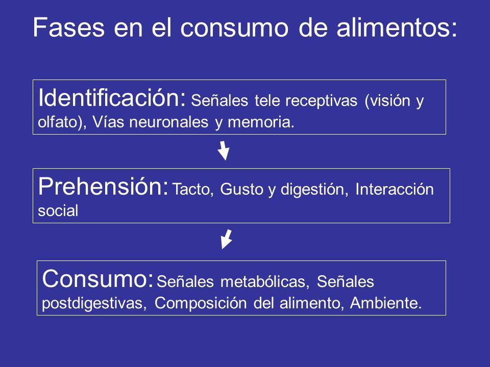 Fases en el consumo de alimentos: