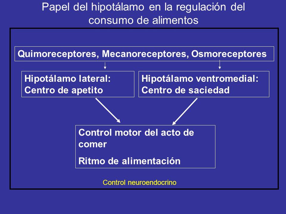 Papel del hipotálamo en la regulación del consumo de alimentos