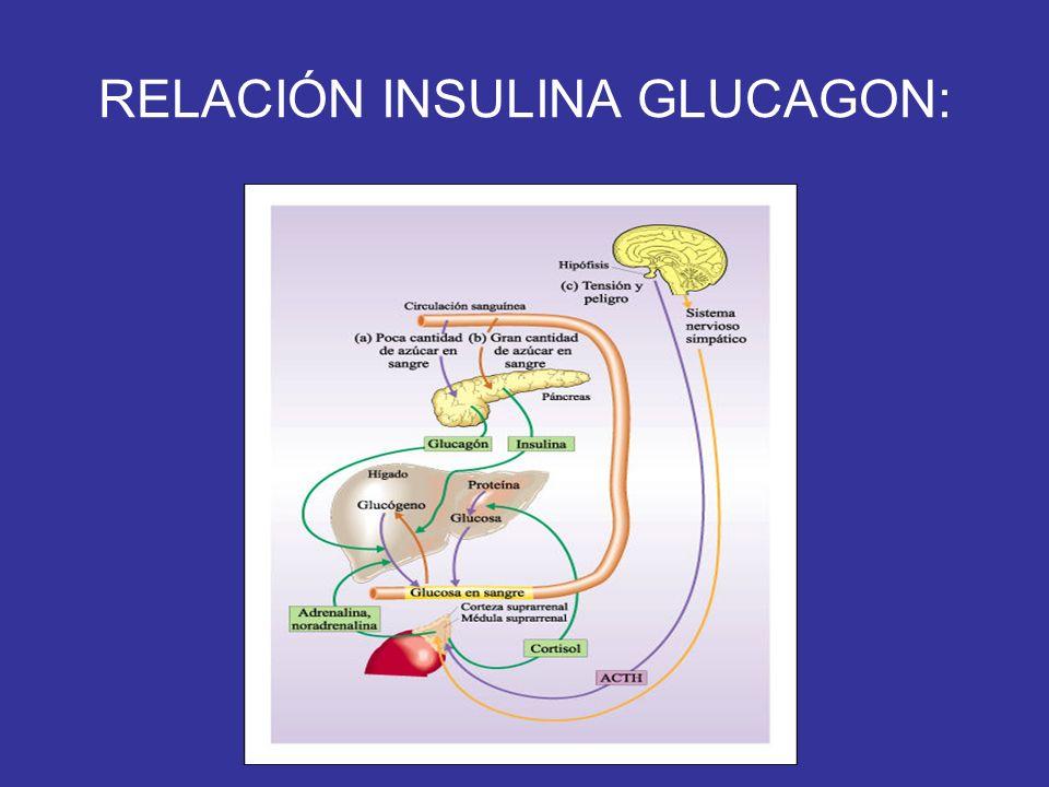 RELACIÓN INSULINA GLUCAGON: