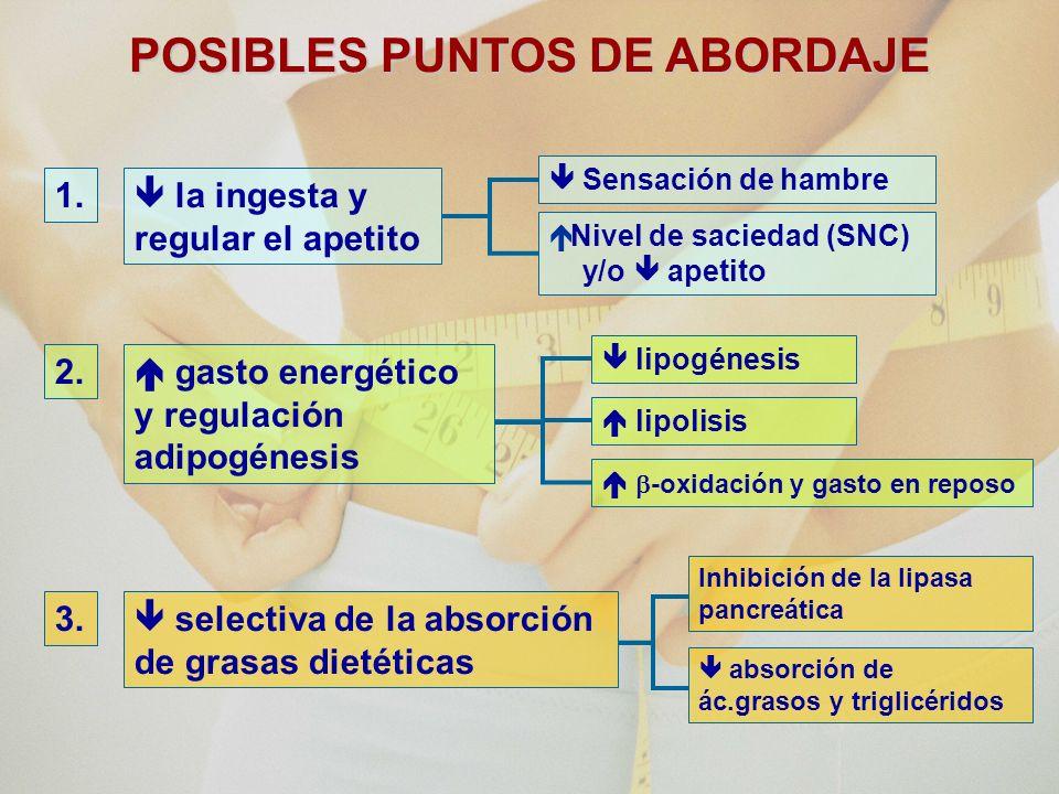 POSIBLES PUNTOS DE ABORDAJE