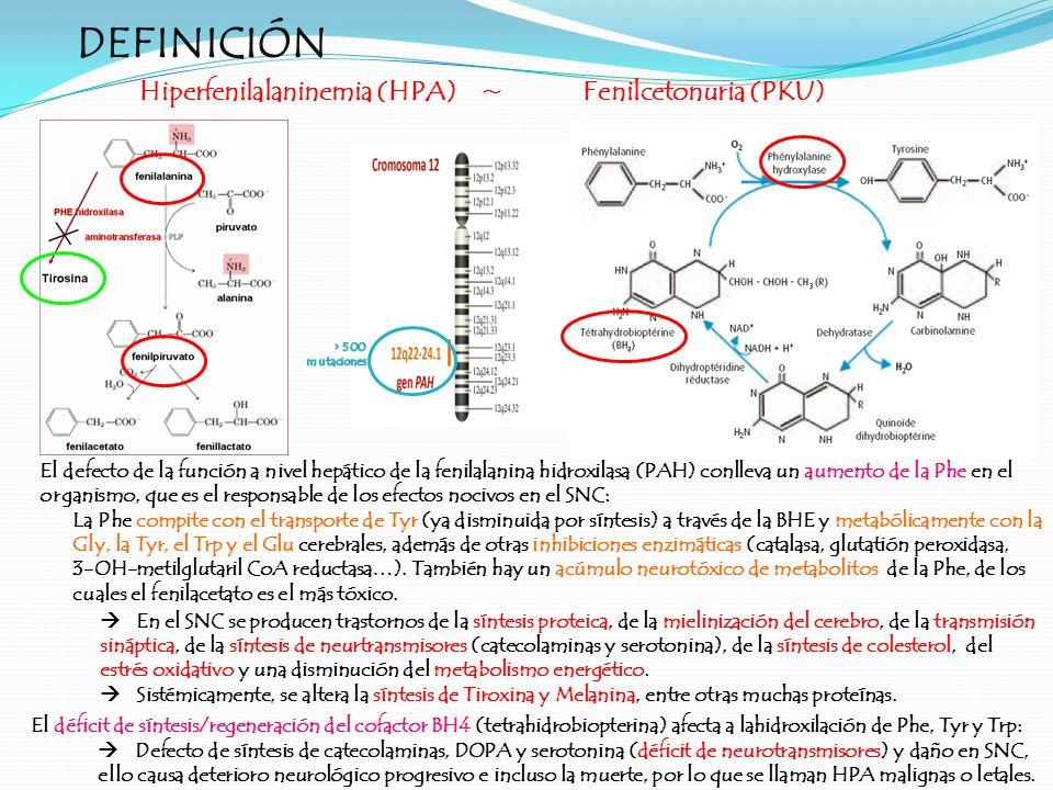 DEFINICIÓN Hiperfenilalaninemia (HPA) ~ Fenilcetonuria (PKU)