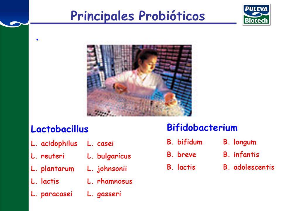 Principales Probióticos