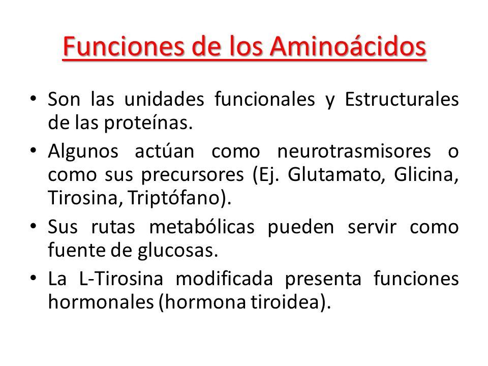 Funciones de los Aminoácidos