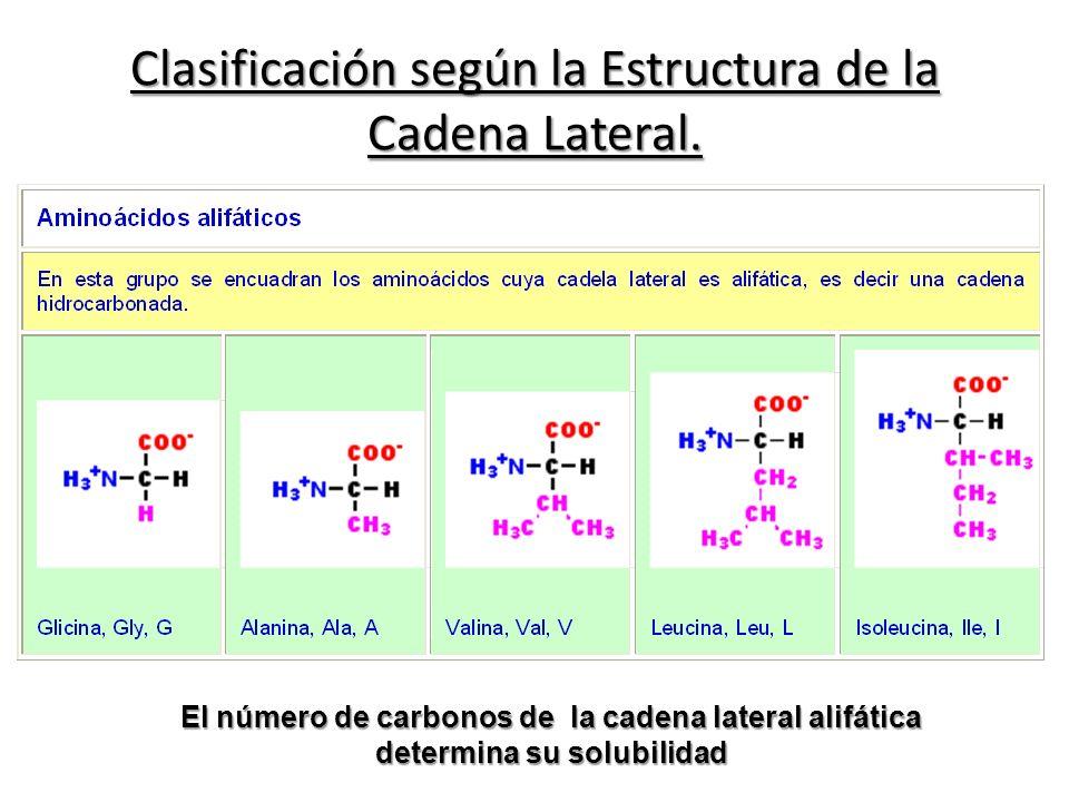 Clasificación según la Estructura de la Cadena Lateral.