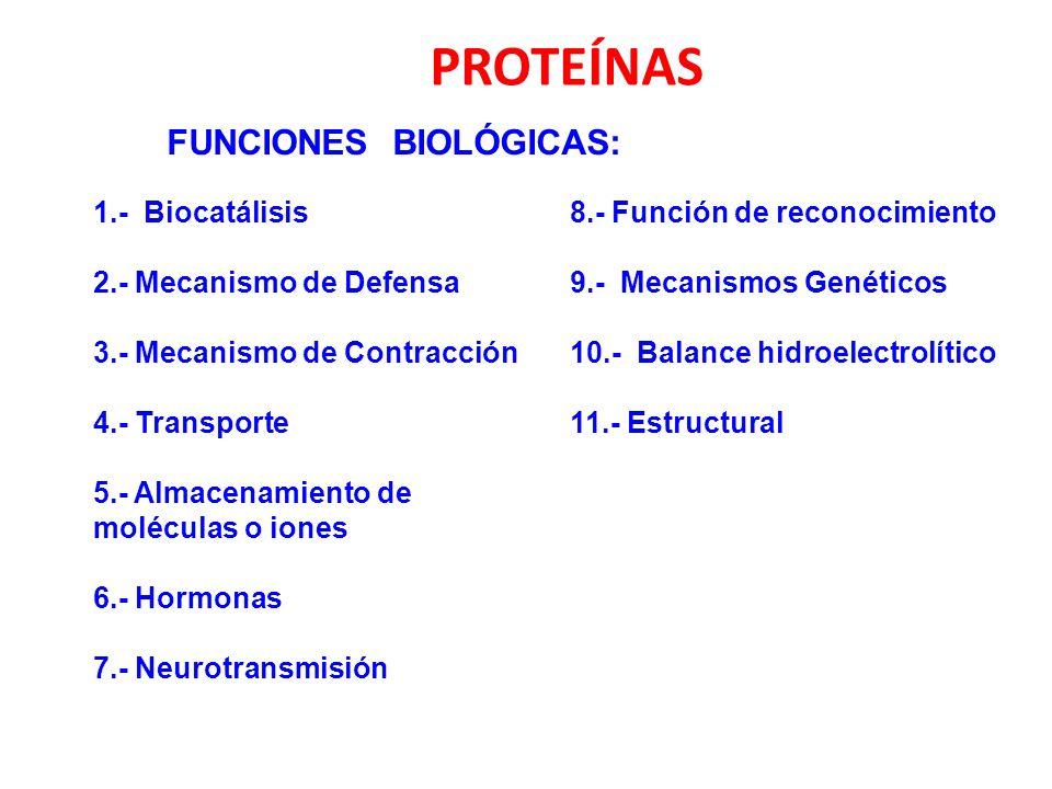 PROTEÍNAS FUNCIONES BIOLÓGICAS: 1.- Biocatálisis