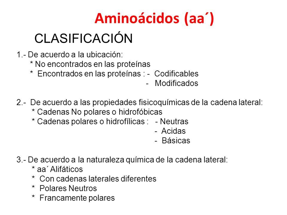 Aminoácidos (aa´) CLASIFICACIÓN 1.- De acuerdo a la ubicación: