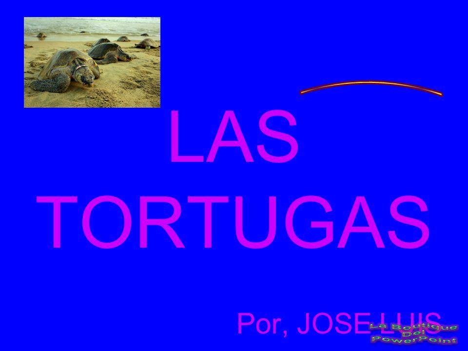 LAS TORTUGAS Por, JOSE LUIS
