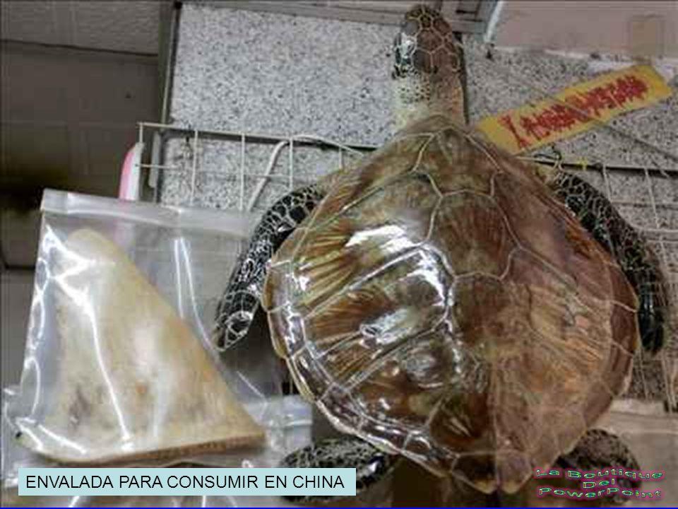 ENVALADA PARA CONSUMIR EN CHINA