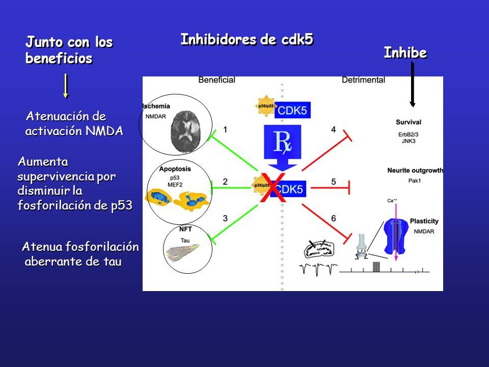 Inhibidores de cdk5 Junto con los beneficios Inhibe Atenuación de