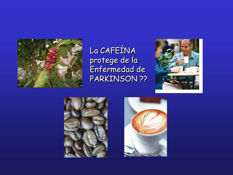 La CAFEÍNA protege de la Enfermedad de PARKINSON