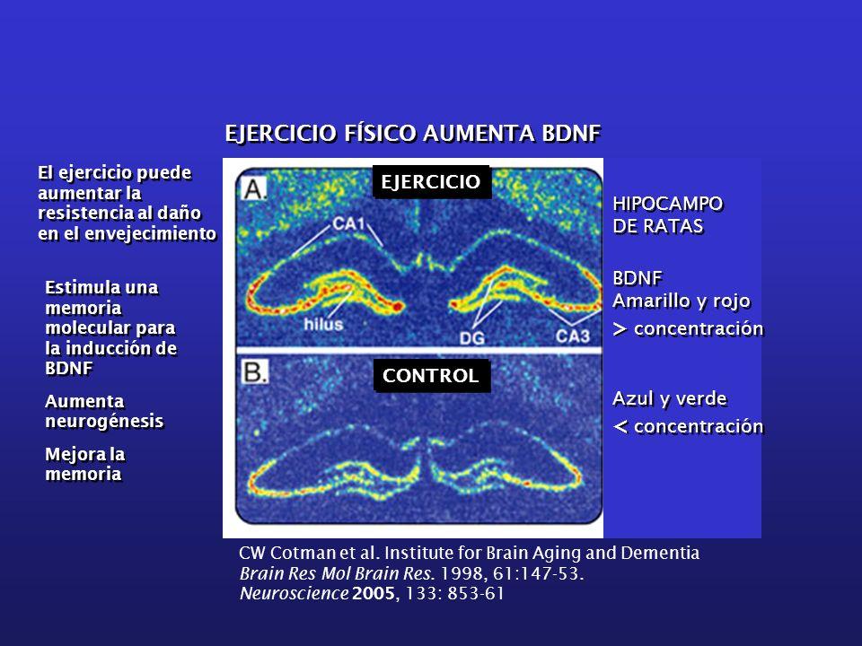 > concentración < concentración EJERCICIO FÍSICO AUMENTA BDNF