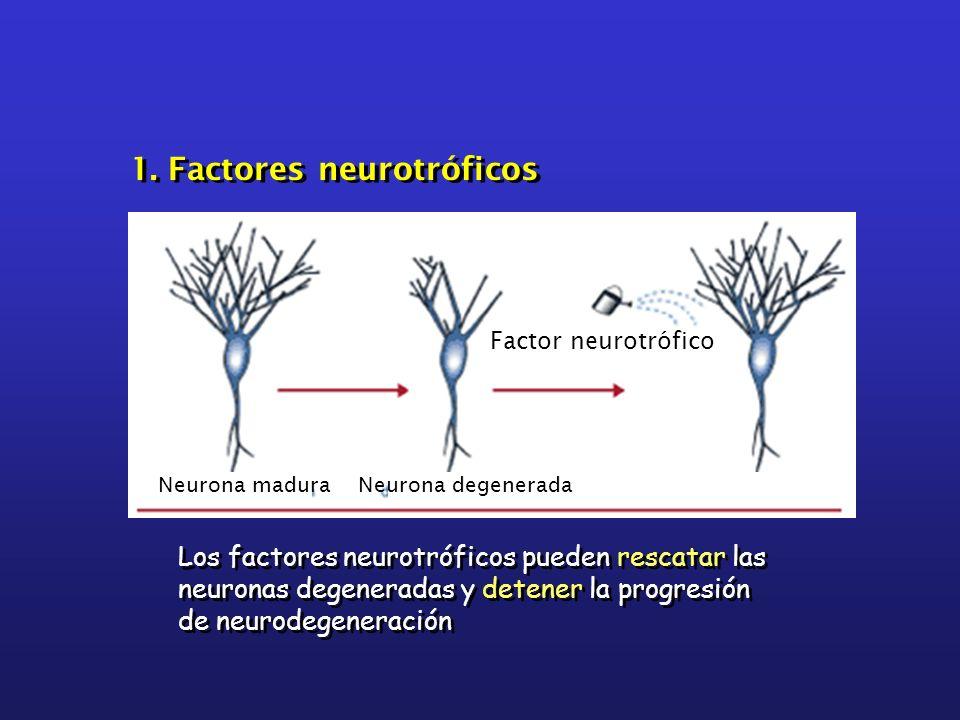 1. Factores neurotróficos