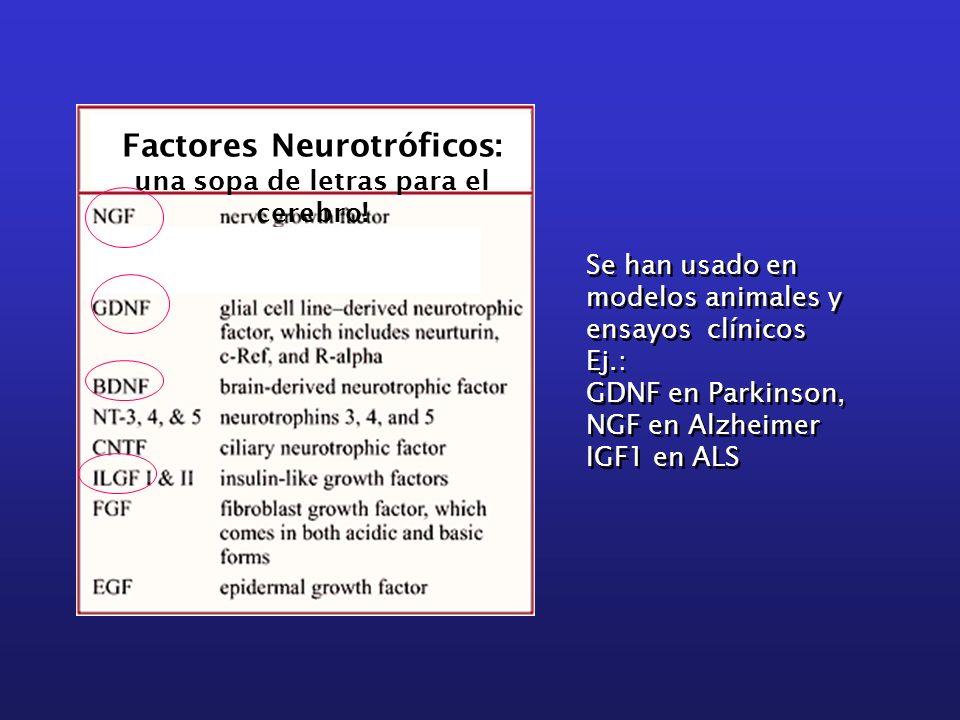 Factores Neurotróficos: una sopa de letras para el cerebro!