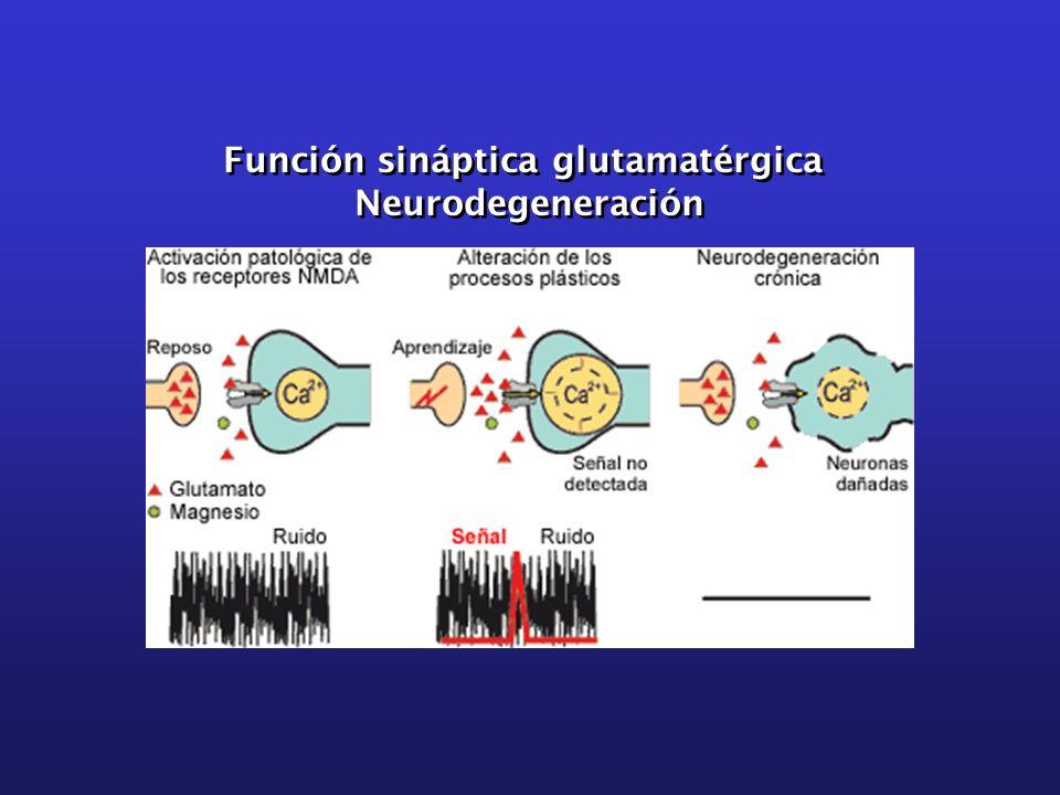 Función sináptica glutamatérgica