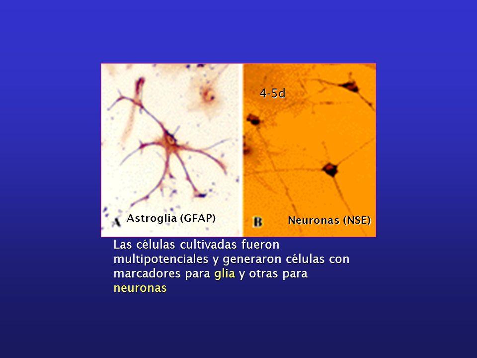 4-5d Astroglia (GFAP) Neuronas (NSE)