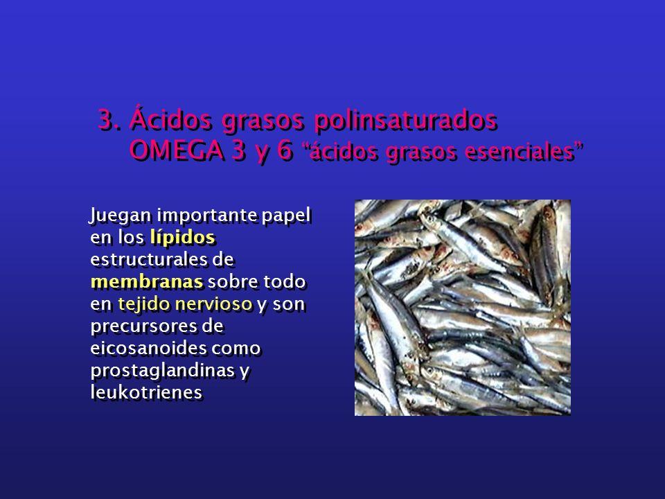 3. Ácidos grasos polinsaturados OMEGA 3 y 6 ácidos grasos esenciales