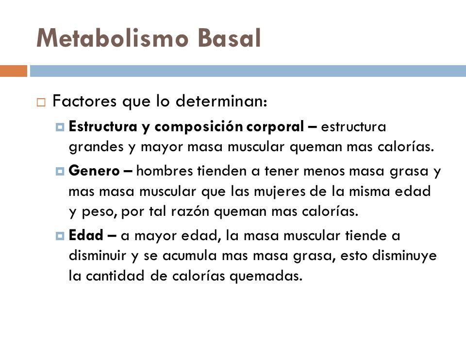 Metabolismo Basal Factores que lo determinan: