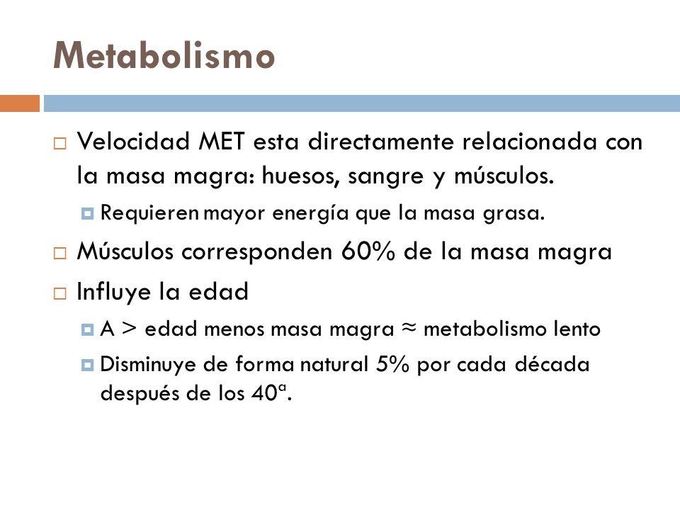 Metabolismo Velocidad MET esta directamente relacionada con la masa magra: huesos, sangre y músculos.