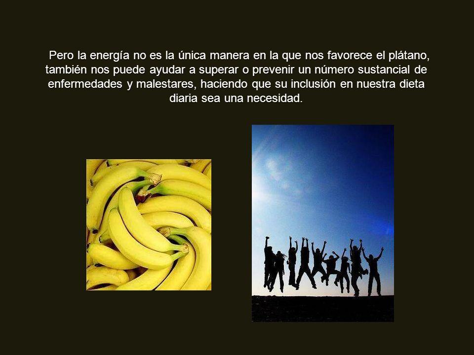 Pero la energía no es la única manera en la que nos favorece el plátano, también nos puede ayudar a superar o prevenir un número sustancial de enfermedades y malestares, haciendo que su inclusión en nuestra dieta diaria sea una necesidad.