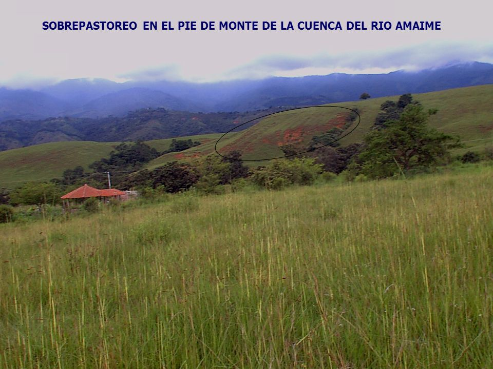 SOBREPASTOREO EN EL PIE DE MONTE DE LA CUENCA DEL RIO AMAIME