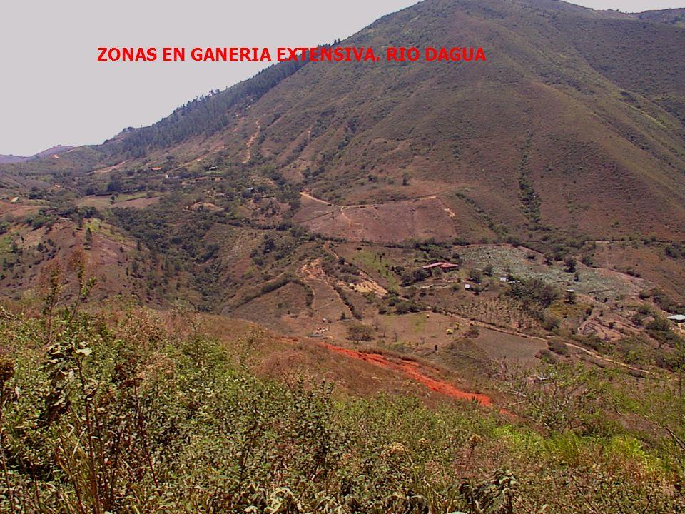 ZONAS EN GANERIA EXTENSIVA. RIO DAGUA