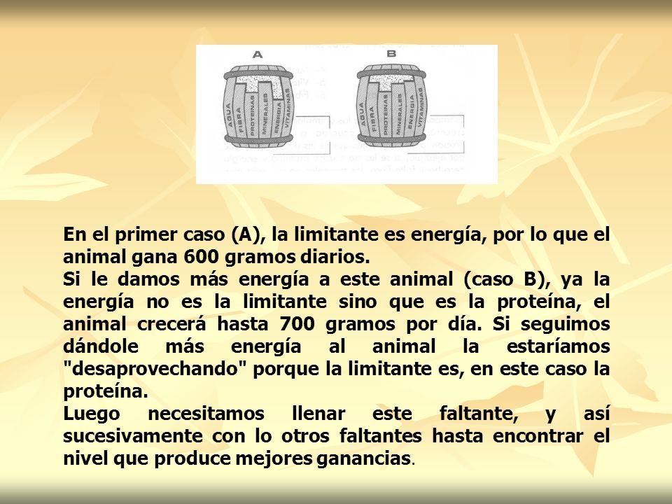 En el primer caso (A), la limitante es energía, por lo que el animal gana 600 gramos diarios.