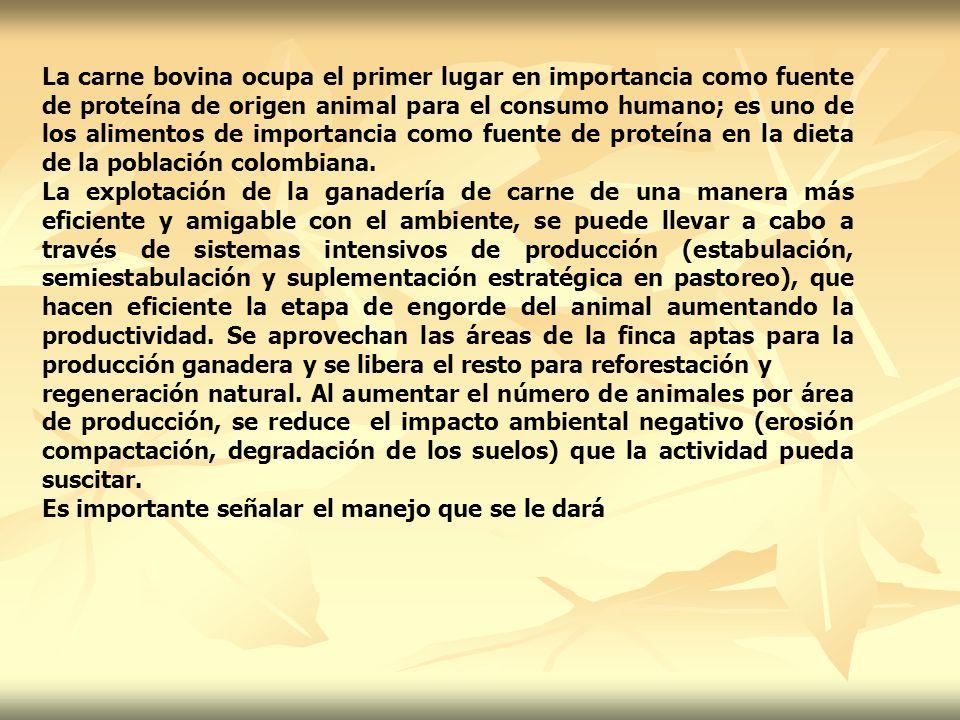 La carne bovina ocupa el primer lugar en importancia como fuente de proteína de origen animal para el consumo humano; es uno de los alimentos de importancia como fuente de proteína en la dieta de la población colombiana.