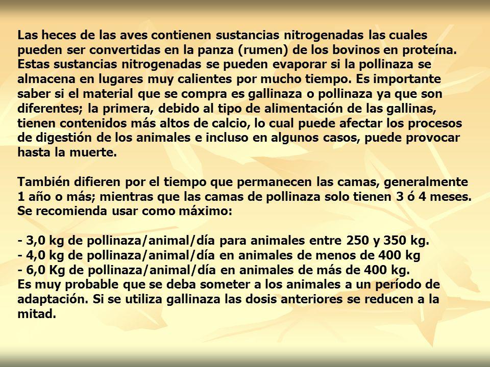 Las heces de las aves contienen sustancias nitrogenadas las cuales pueden ser convertidas en la panza (rumen) de los bovinos en proteína.