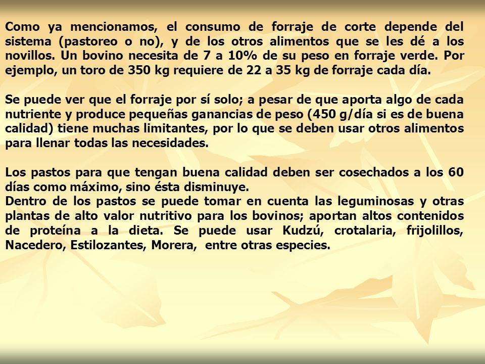 Como ya mencionamos, el consumo de forraje de corte depende del sistema (pastoreo o no), y de los otros alimentos que se les dé a los novillos. Un bovino necesita de 7 a 10% de su peso en forraje verde. Por ejemplo, un toro de 350 kg requiere de 22 a 35 kg de forraje cada día.