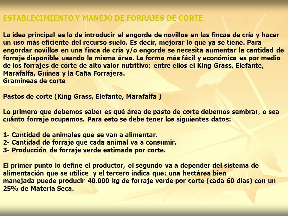 ESTABLECIMIENTO Y MANEJO DE FORRAJES DE CORTE