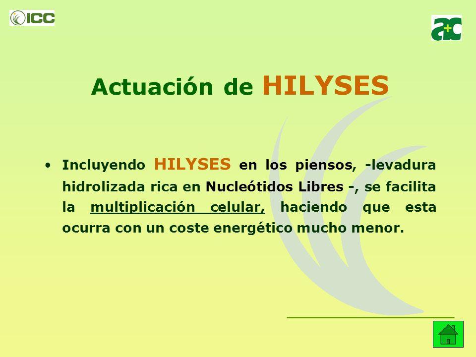 Actuación de HILYSES