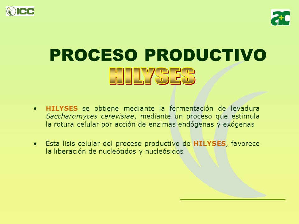 PROCESO PRODUCTIVO HILYSES