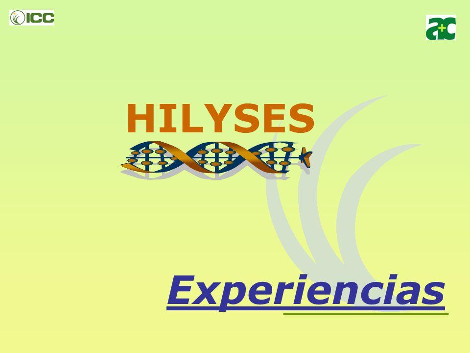 HILYSES Experiencias