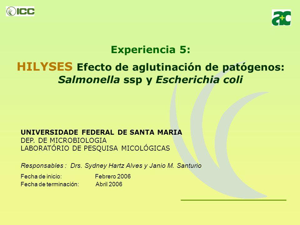 Experiencia 5: HILYSES Efecto de aglutinación de patógenos: Salmonella ssp y Escherichia coli