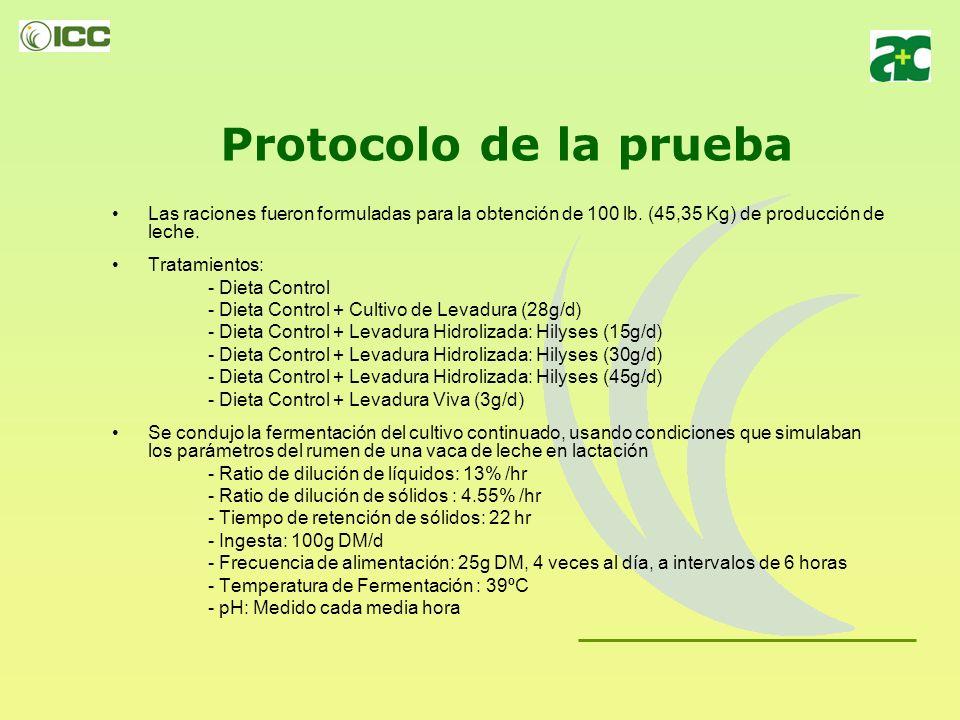 Protocolo de la prueba Las raciones fueron formuladas para la obtención de 100 lb. (45,35 Kg) de producción de leche.