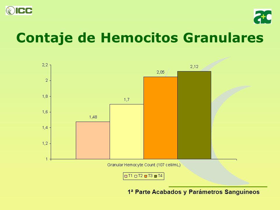 Contaje de Hemocitos Granulares