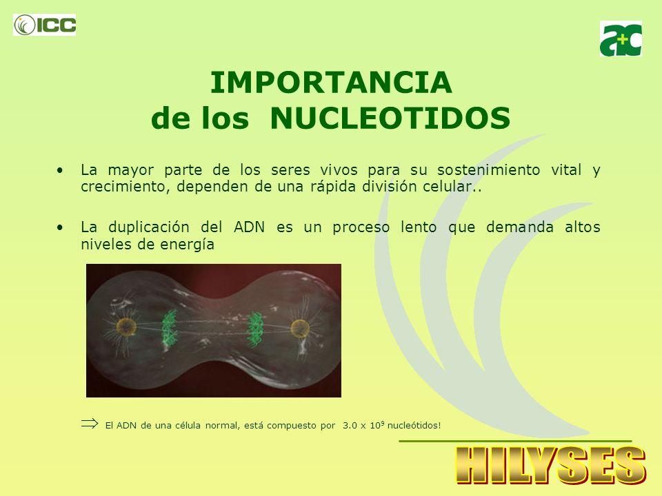 IMPORTANCIA de los NUCLEOTIDOS