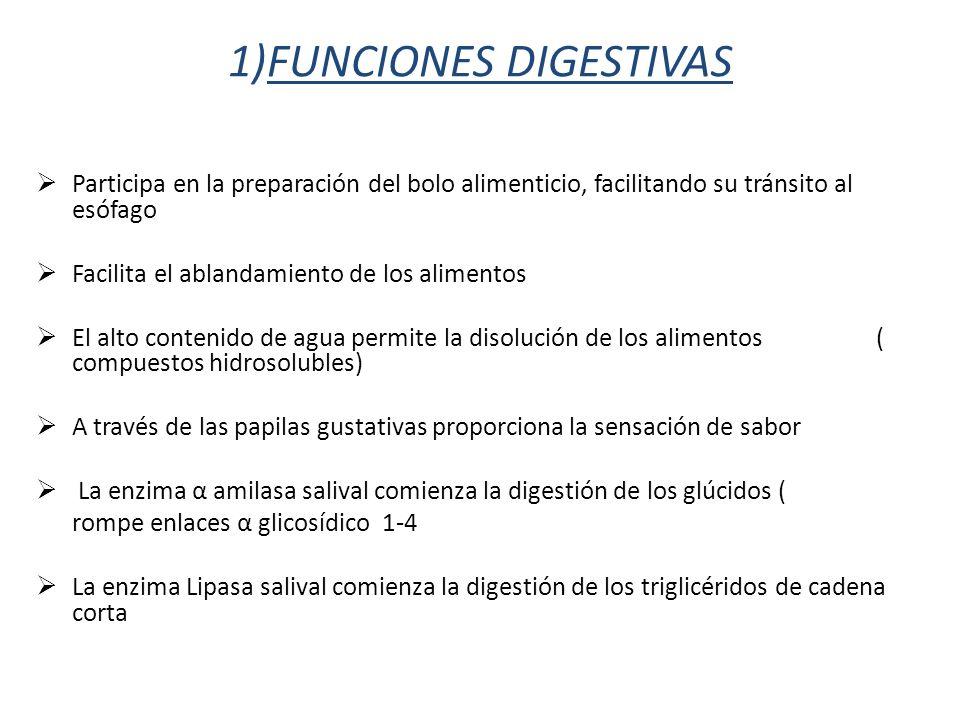1)FUNCIONES DIGESTIVAS