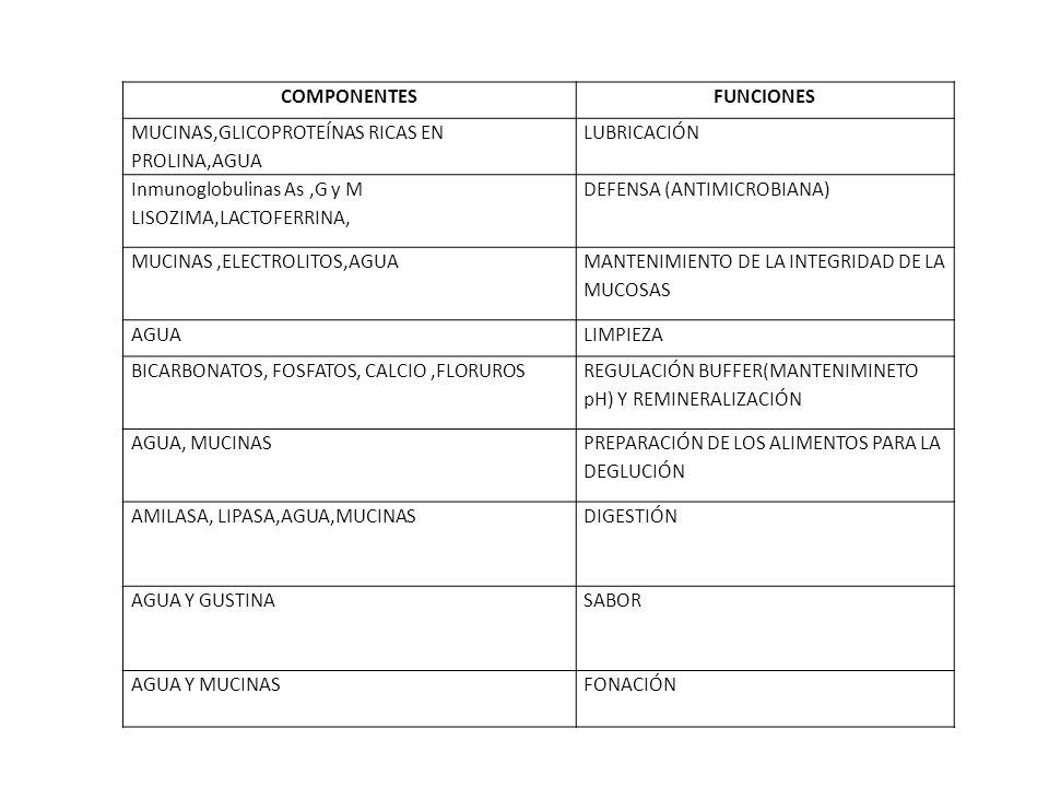 COMPONENTES FUNCIONES. MUCINAS,GLICOPROTEÍNAS RICAS EN PROLINA,AGUA. LUBRICACIÓN. Inmunoglobulinas As ,G y M.
