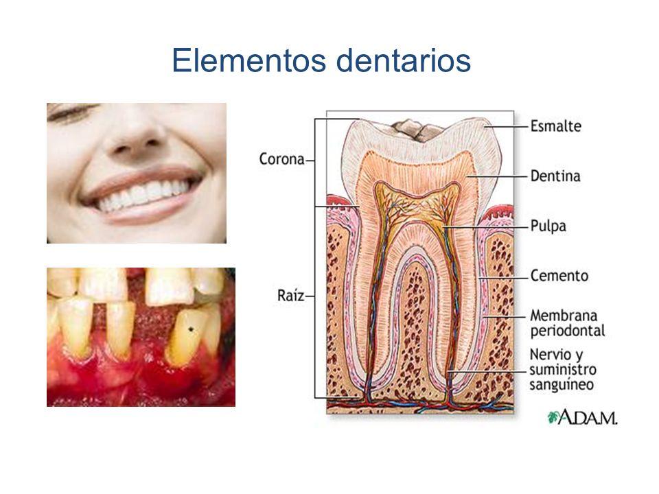 Elementos dentarios