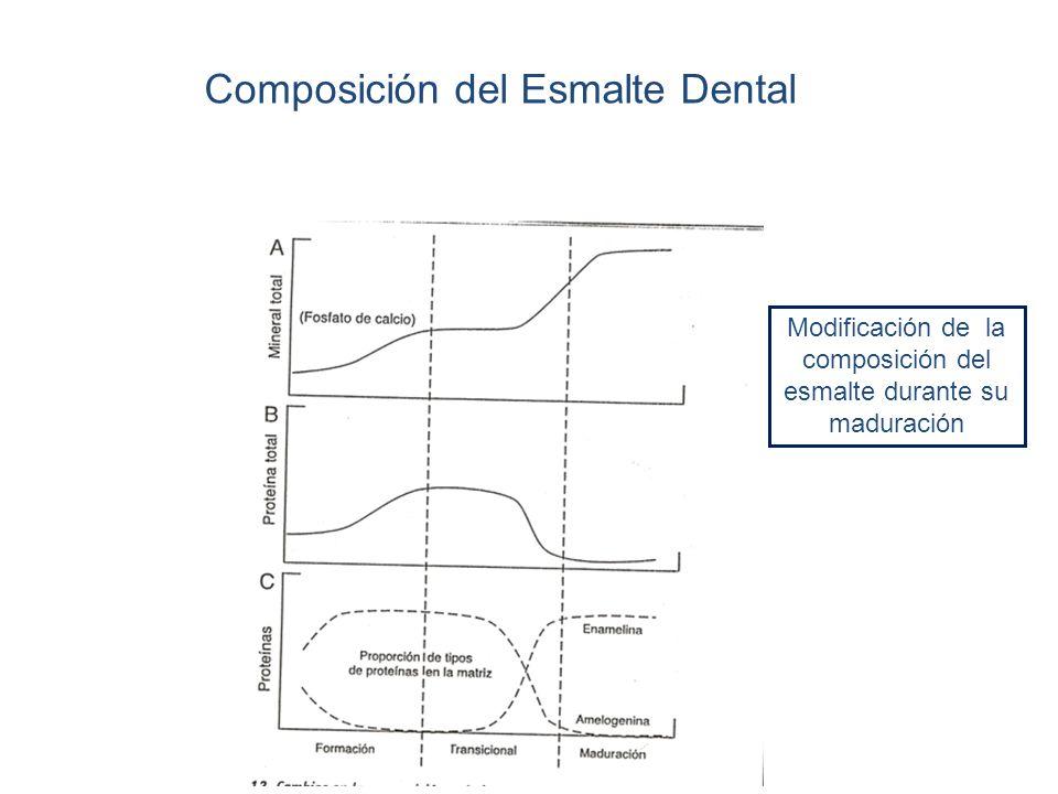 Composición del Esmalte Dental