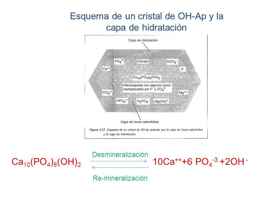 Esquema de un cristal de OH-Ap y la capa de hidratación