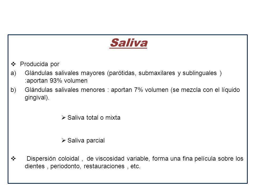 Saliva Producida por. Glándulas salivales mayores (parótidas, submaxilares y sublinguales ) :aportan 93% volumen.