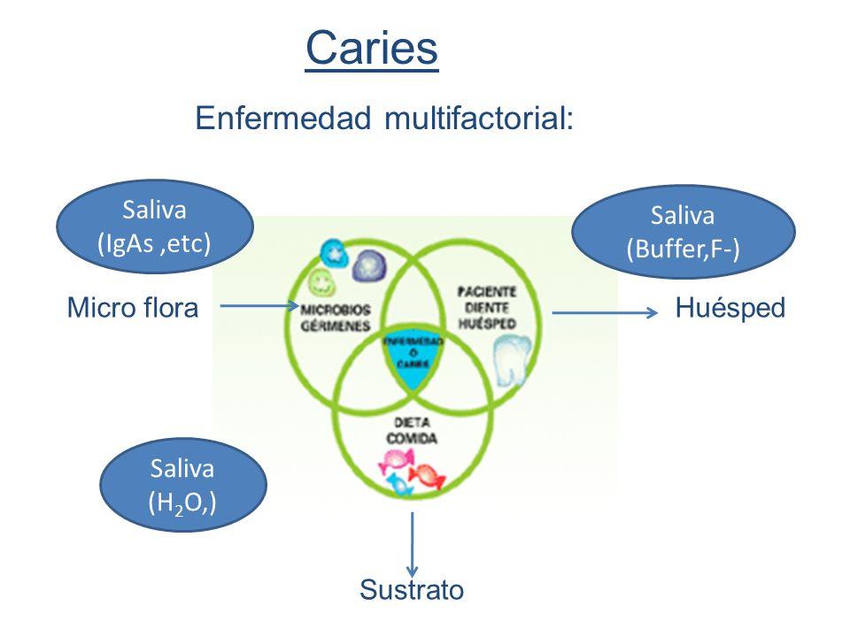 Caries Enfermedad multifactorial: Saliva (IgAs ,etc) Saliva