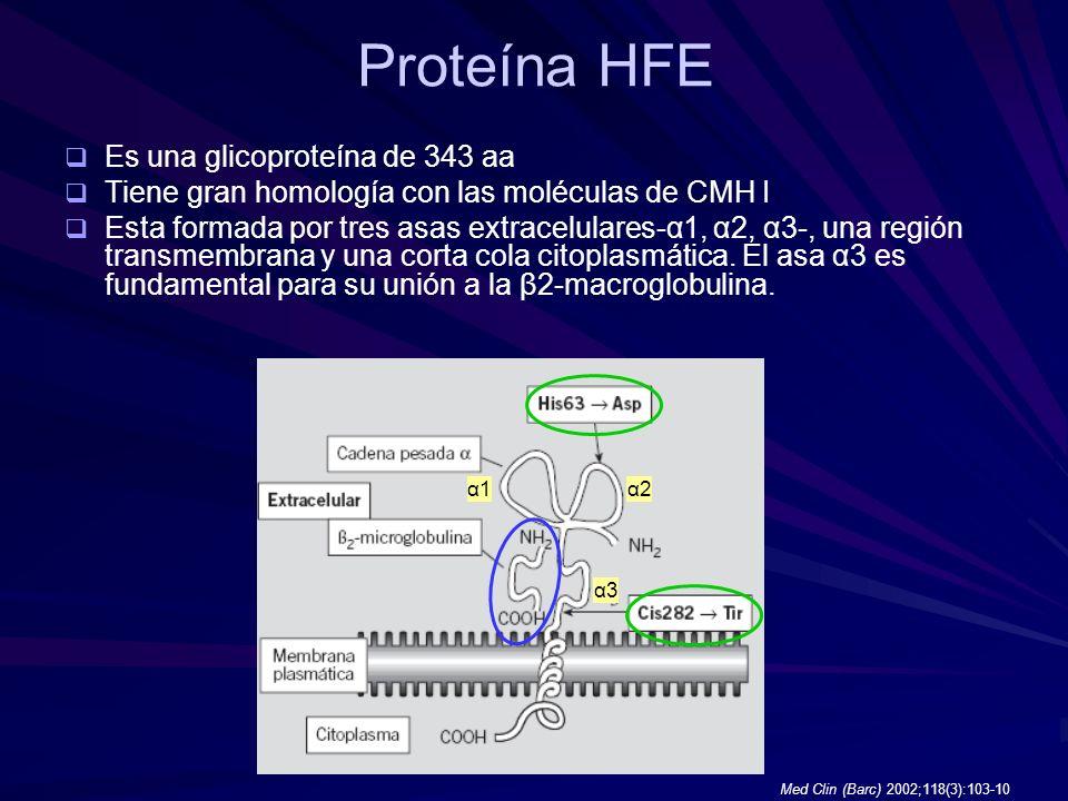Proteína HFE Es una glicoproteína de 343 aa