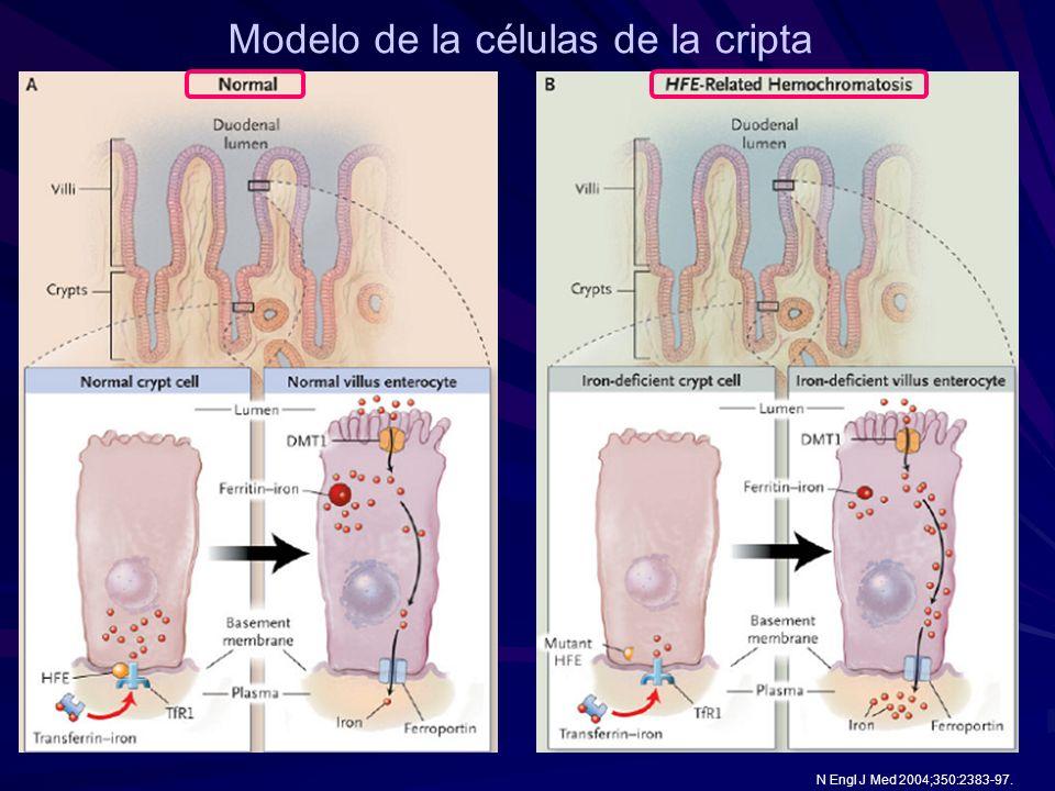 Modelo de la células de la cripta