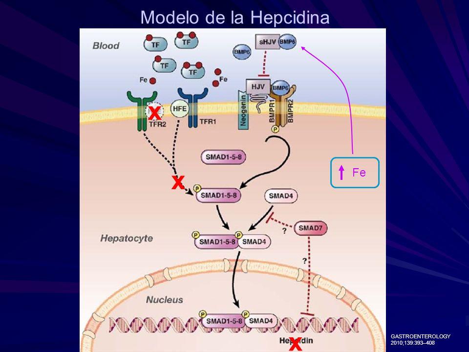 Modelo de la Hepcidina x Fe x x GASTROENTEROLOGY 2010;139:393–408