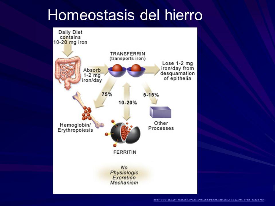 Homeostasis del hierro