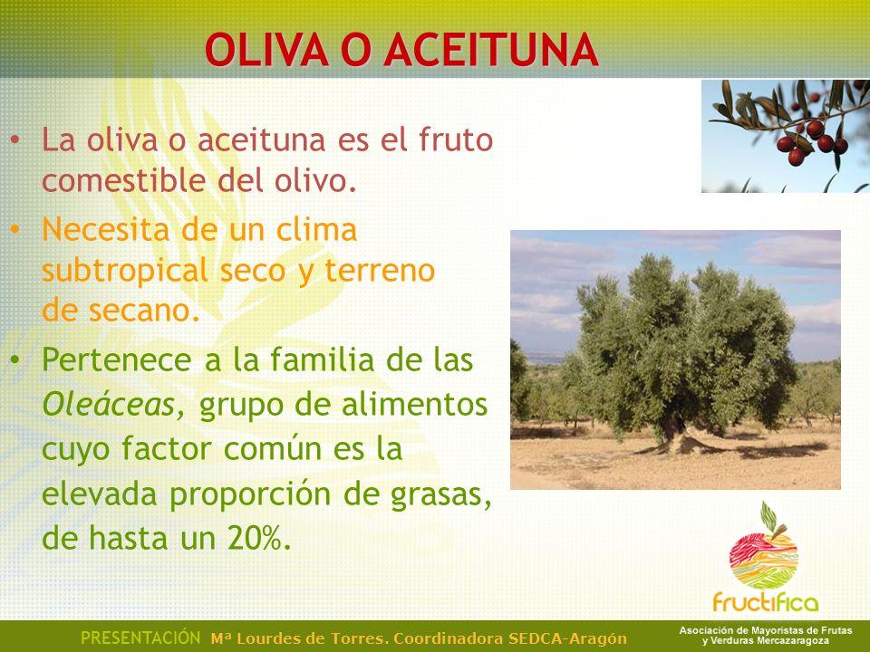 OLIVA O ACEITUNA La oliva o aceituna es el fruto comestible del olivo.